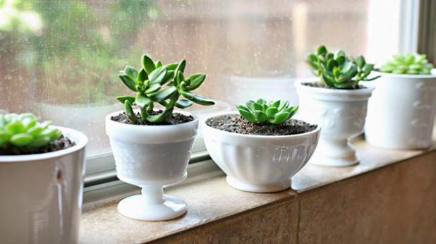 10 Plantas de interiores que resisten absolutamente todo, incluso poca agua y luz