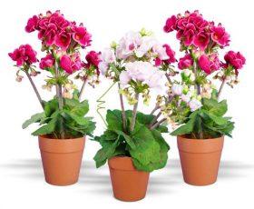 • 7 plantas con flores que puedes mantener fácilmente en interiores