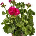 plantas con flores de interiores de gran diversidad de géneros