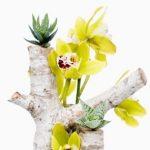Entre las plantas con flores para interiores, no podían faltar las orquídeas