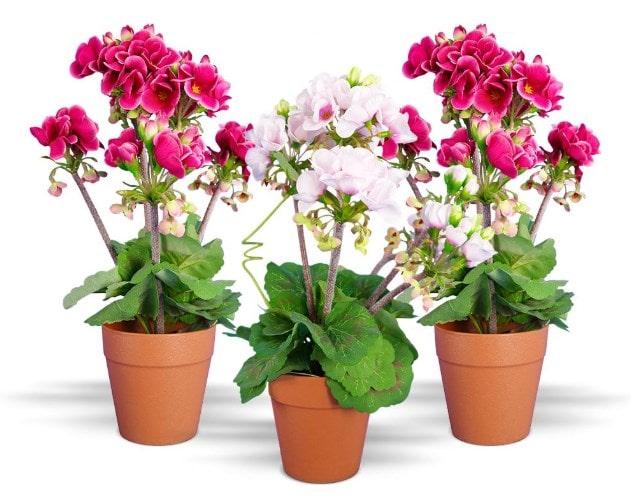 7 plantas con flores que puedes mantener fácilmente en interiores