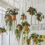 Decoraciones con plantas de interior colgantes