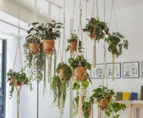 Las plantas de interior colgantes se han convertido en un símbolo de estética