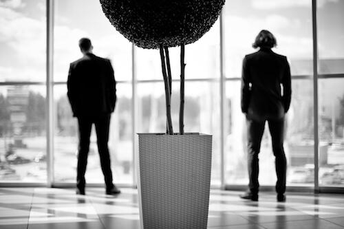 plantas de interior de poca luz