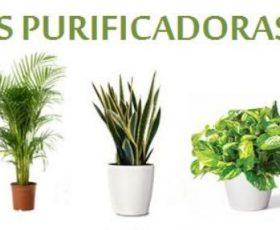 aquí te presentamos las plantas de interior que purifican el aire