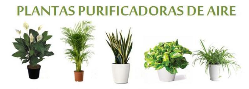 4 plantas de interior que purifican el aire - Plantas de interior que purifican el aire ...