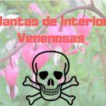 Plantas de interior venenosas