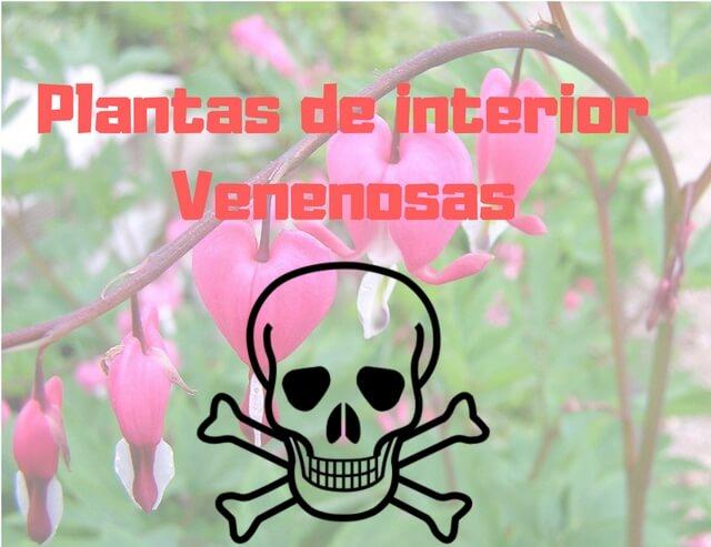 Conoce las 3 plantas de interior m s venenosas y m s - Plantas venenosas de interior ...