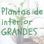 Las mejores plantas de interior grandes
