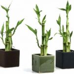 8 Plantas ideales para mantener en espacios con poca luz