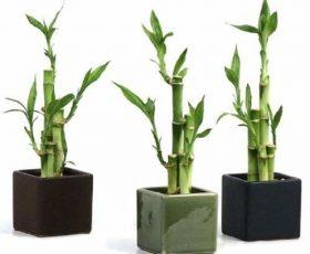 nuestro listado de 8 Plantas ideales para mantener en espacios con poca luz te será de gran utilidad