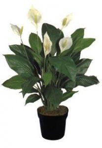 el espatifilo es una de las 8 Plantas ideales para mantener en espacios con poca luz