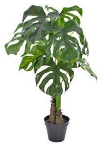 el filodendro es una de las 8 Plantas ideales para mantener en espacios con poca luz