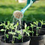 Riego en plantas de interior