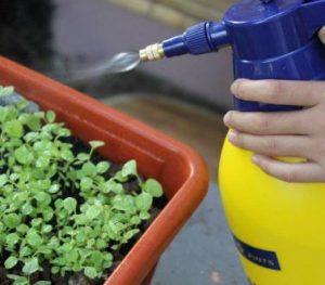 el riego de las plantas de interior se puede hacer pulverizando con mucho cuidado