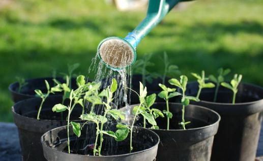 El riego de las plantas de interior es una de las tareas más sencillas, pero que plantea más problemas