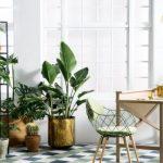 Los mejores cuidados de las plantas de interior