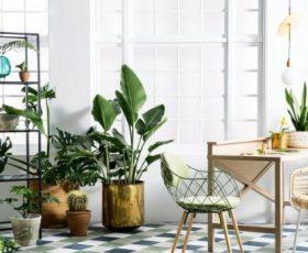 entérate de los mejores cuidados de las plantas de interior
