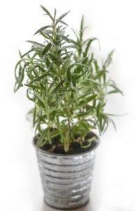 otro aspecto que debes cuidar para los mejores cuidados de las plantas de interior es su entorno