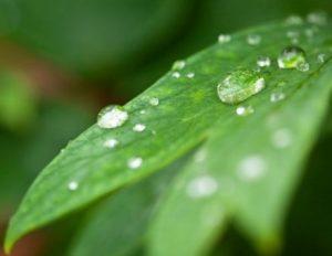 uno de los elementos para los mejores cuidados de las plantas de interior es el agua