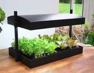 uno de los mejores cuidados de las plantas de interior, es exponerlas a la luz